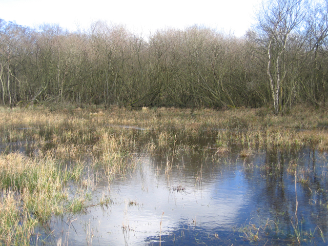 High water levels in Broad Fen, Dilham, Norfolk