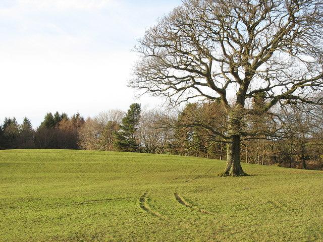 Parkland at Llwyn y Brain