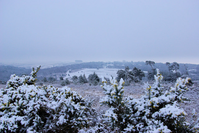 A Bleak Morning on Ashdown Forest