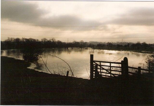 Flooded Pasturelands