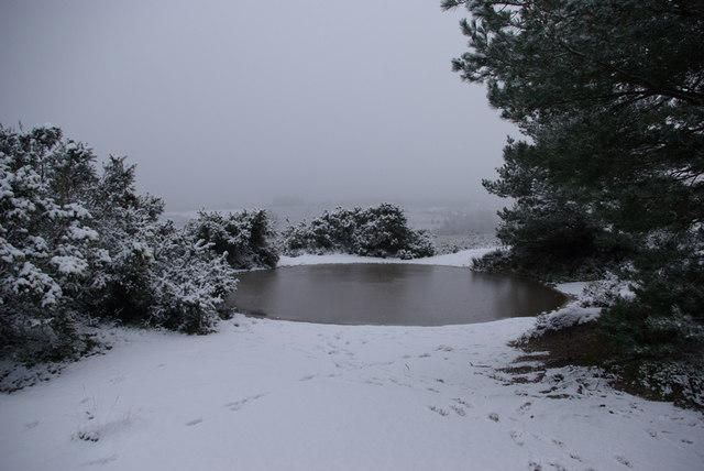 Frozen Pond on Ashdown Forest