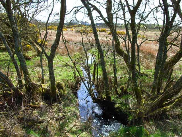 Marshy ground  along the Gass Burn