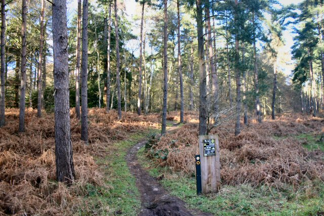 Thetford Forest cycle track