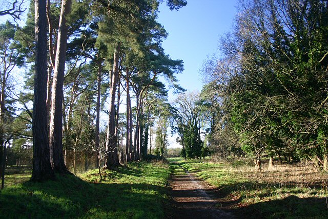 Track on Barnhamcross Common