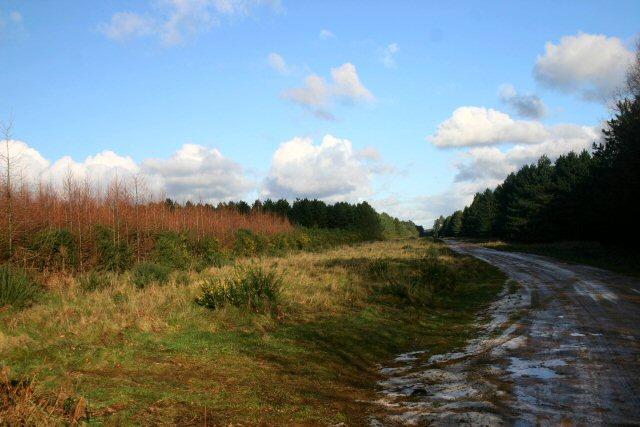 Track to Warren Wood
