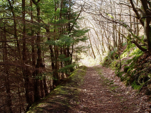 Footpath through Coed y Nant