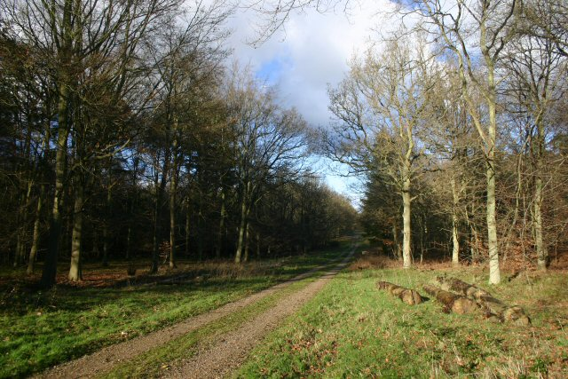 Track into Thetford Forest