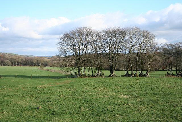 Bishop's Nympton: Drewstone Moors