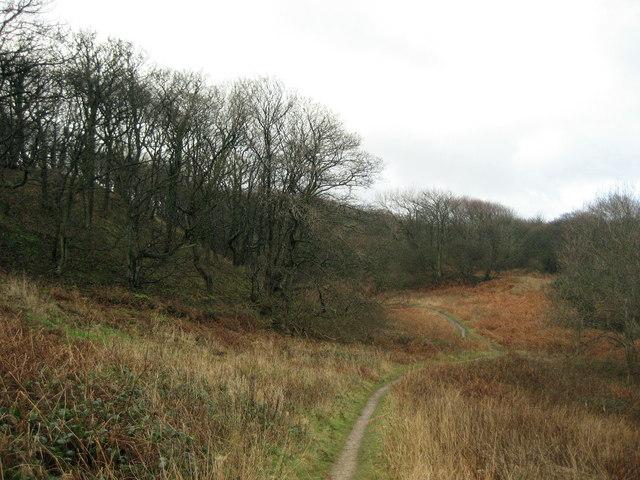 Woods above Hawthorn Burn