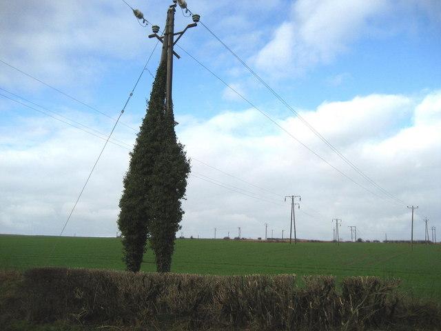 Field of Poles