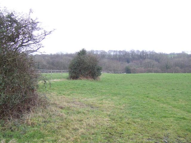 Hawthorn bushes