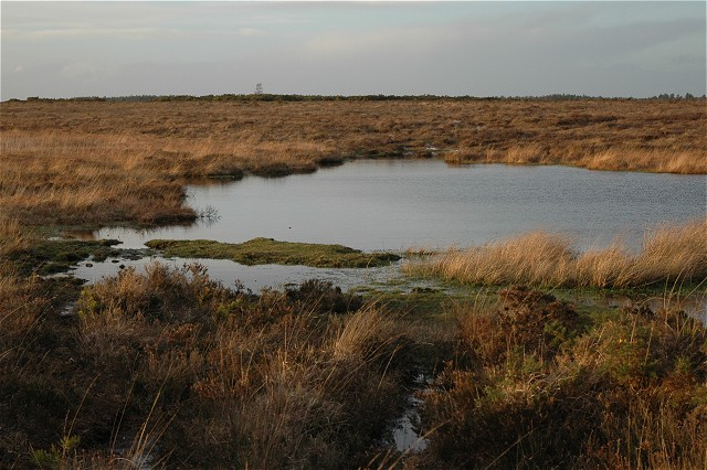 Stonyford Pond, Beaulieu Heath