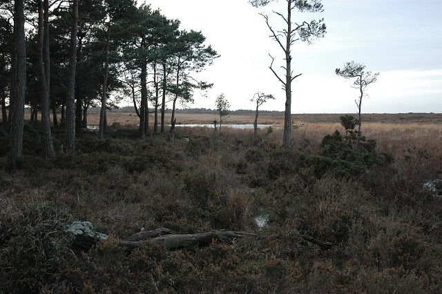 Trees, Stonyford Pond, Beaulieu Heath