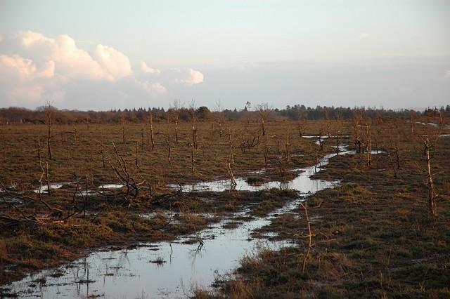 Burned heathland, Beaulieu Heath