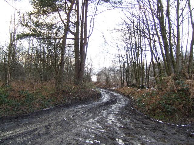 Limekiln Lane, Limekiln Wood