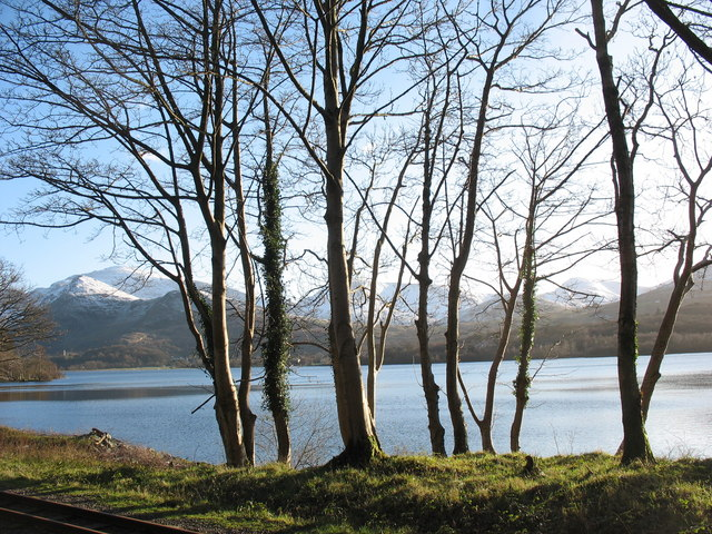 A line of trees along the shore of Llyn Padarn