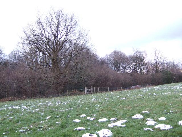 Birchett's Wood