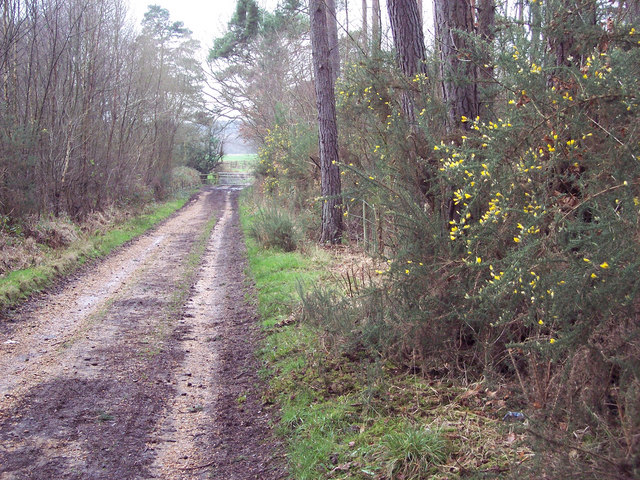 Bridleway from Alderholt to Cranborne Common