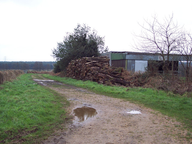 Stacked Timber beside Bridleway to Cranborne Common