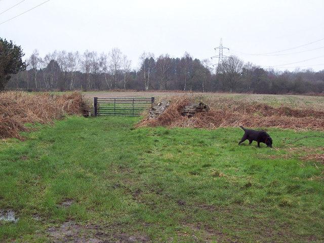 Footpath, Cranborne Common