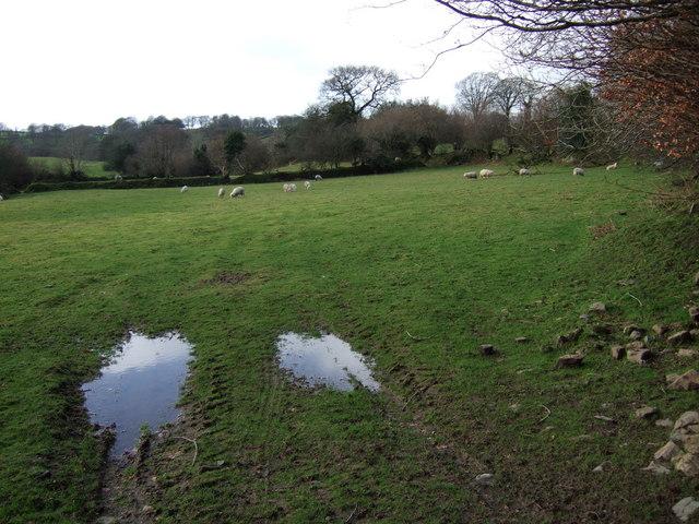 Field at Lake