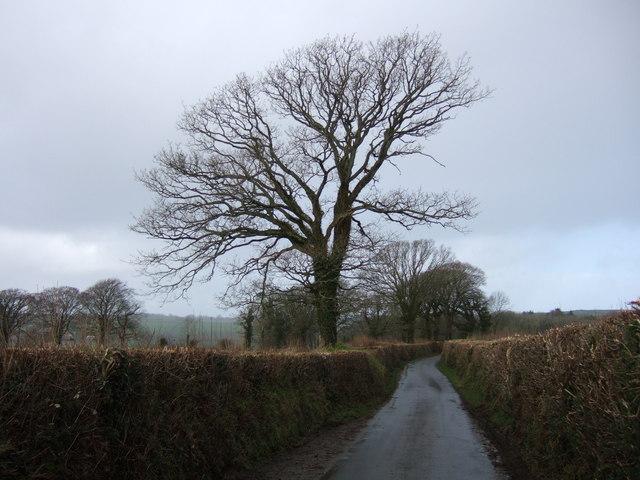 Lane to Bridestowe