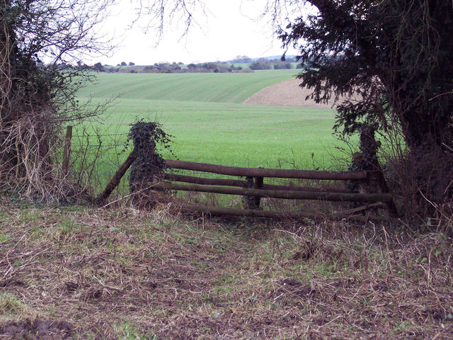 Tiger Trap near Odstock Copse