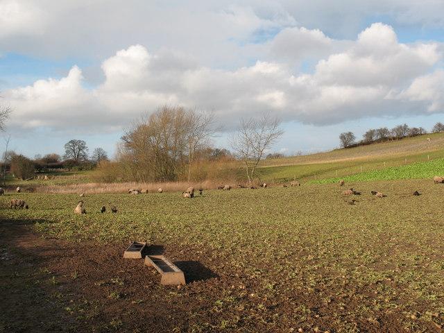 Farmland at Sheephills Farm
