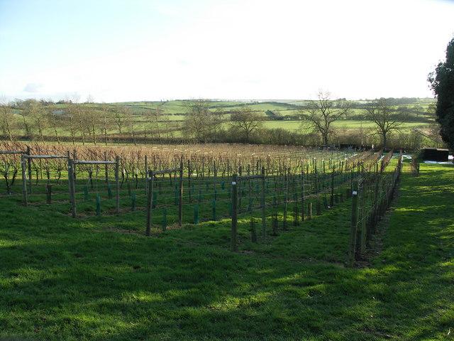 Welland Valley Vineyard