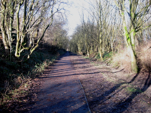Old Branch Line