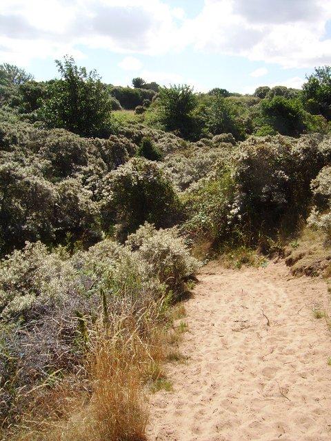 Path from the beach, Gullane