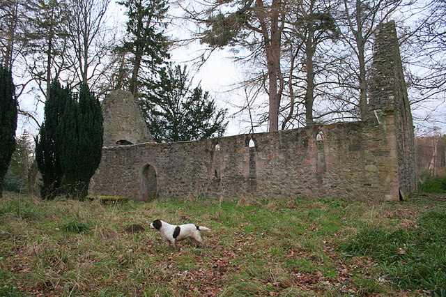 The south facing wall of the ruined church at Altyre Estate.