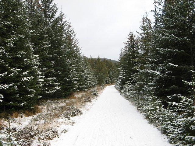 Forest road, Badaguish
