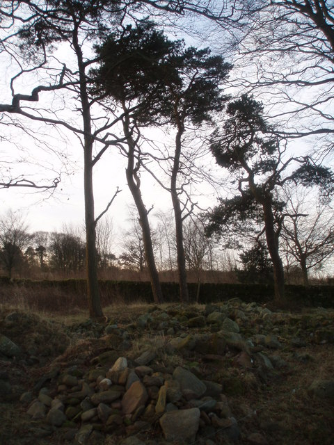 Trees to the North of Kirrie Hill