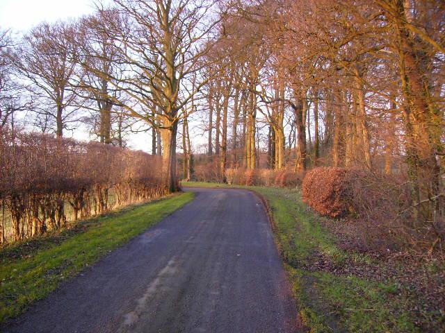 Country lane near Ruston Carr Plantation