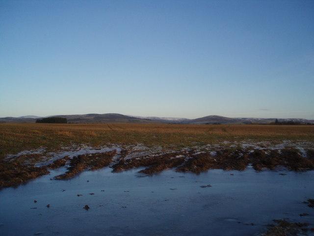 Angus Farmland