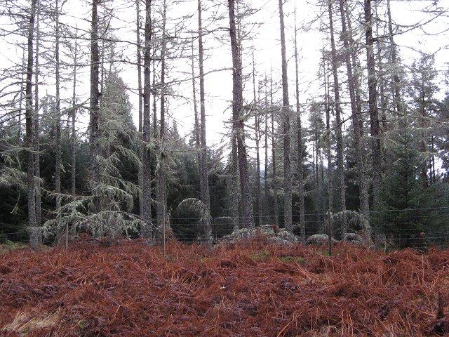 Auchteraw Woods