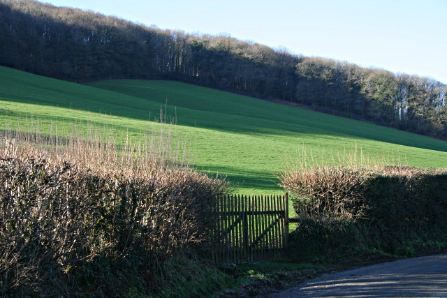 Woodland on the valley side