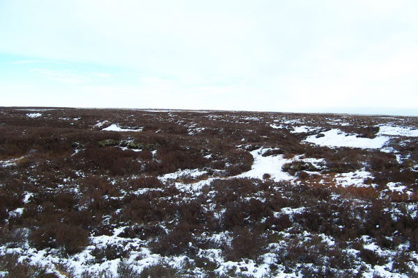 Gouthwaite Moor