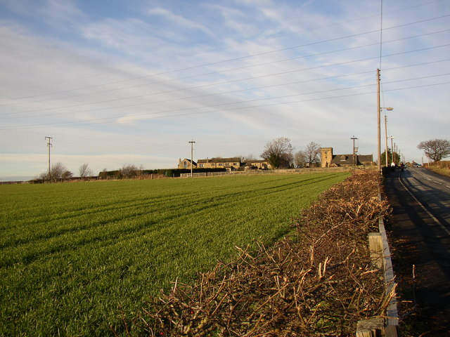 Young crop in field off Church Lane, Hartshead, January 2007