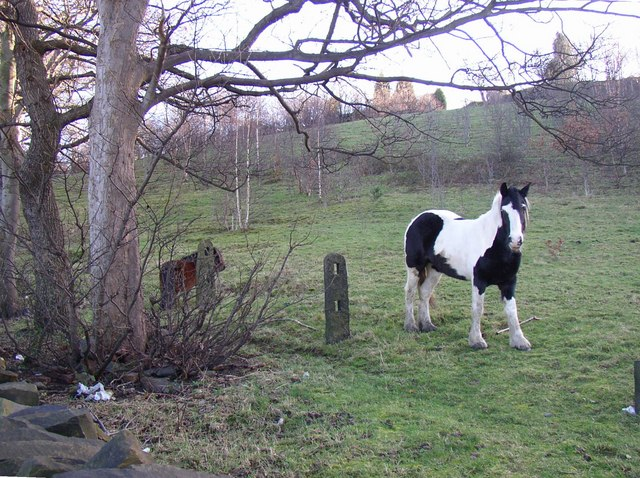 Horses in field called Bowling Alley, Rastrick