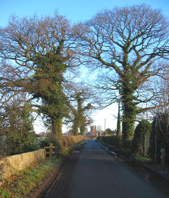 Mature oaks outside Wrenbury
