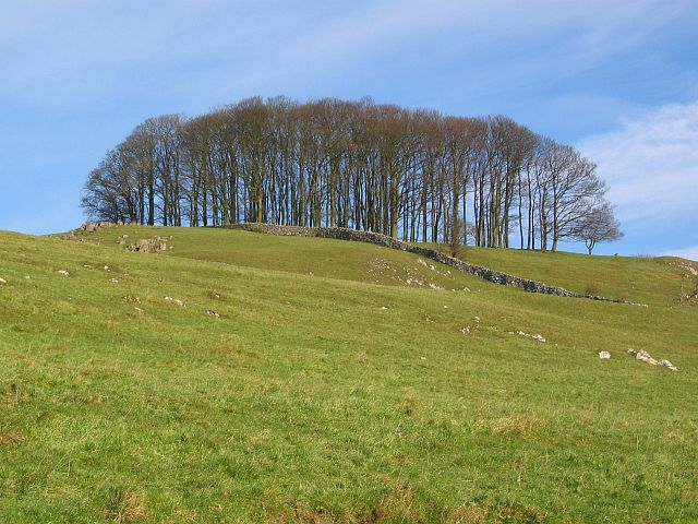Copse and rocky outcrops