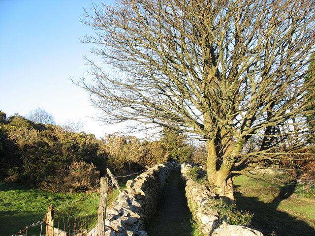 Footpath between Bwlch and Uwchlaw'r Ffynnon