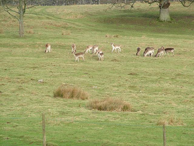 Deer on the Dalemain Estate
