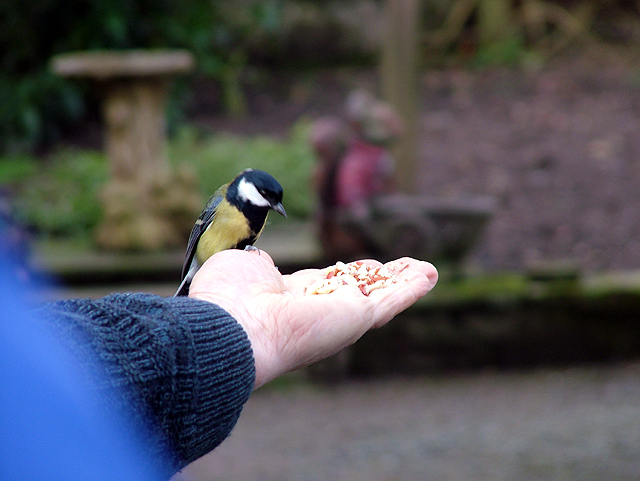 The retired gamekeeper from Dalemain house feeding the birds from his hands