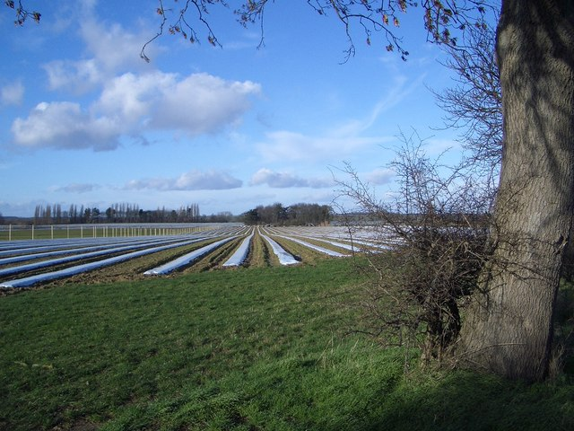 Early Crop Protection near Tansor