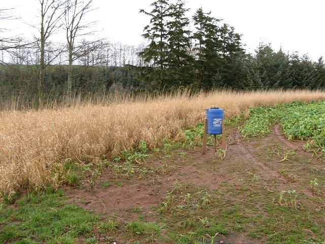 Pheasant feeder and wild margin, Manderston
