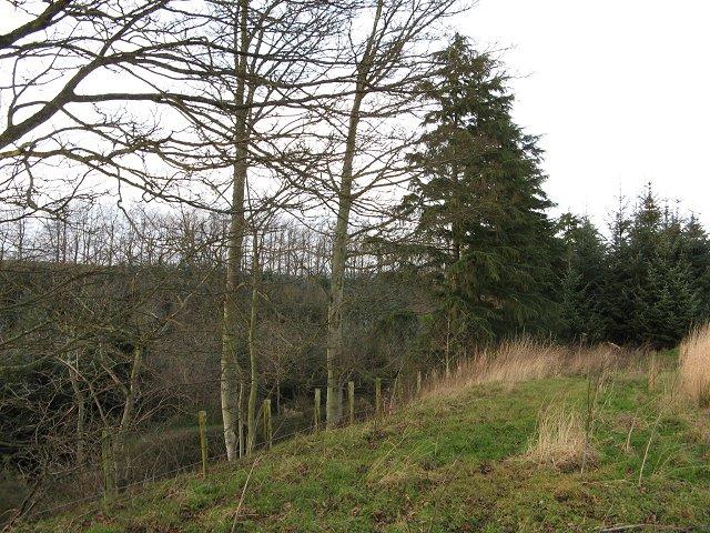 Field margin and Howdens Plantation, Manderston