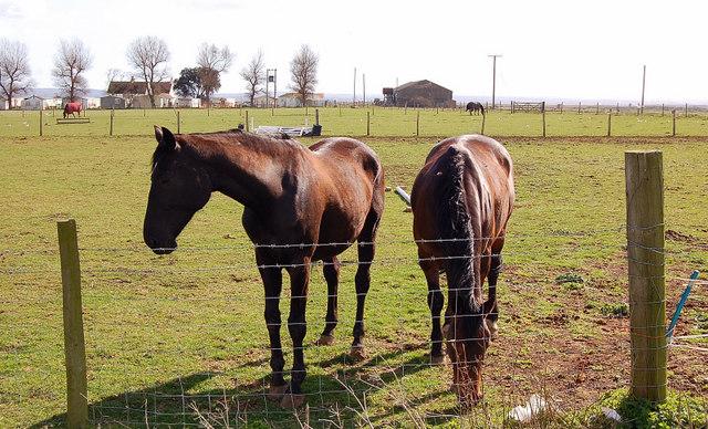 Leysdown ponies